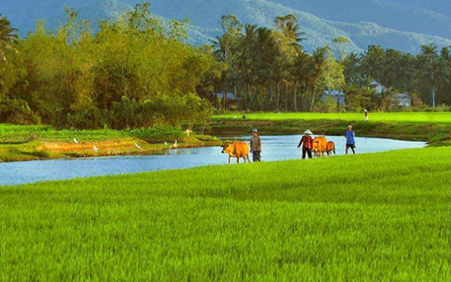 Visit Thai Binh from Hanoi (Day tour)