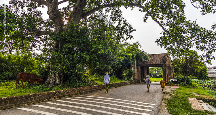 Day 3: Hanoi – Duong Lam ancient village – Mong Phu Hamlet.