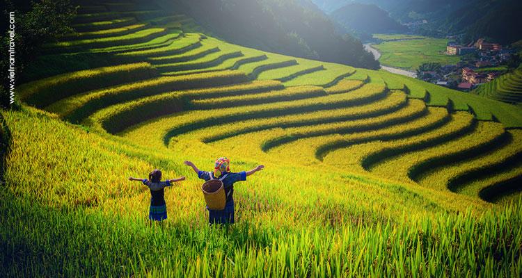 Sapa Heavenly terraced rice fields