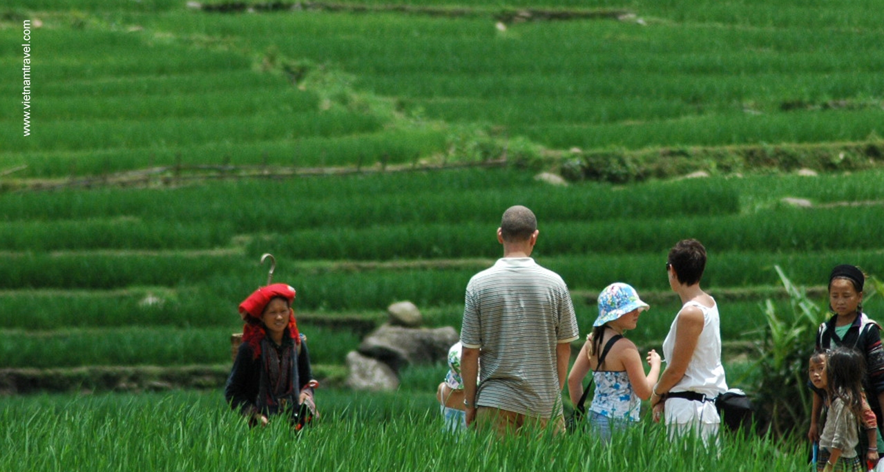 Sapa in June, when rice is still green