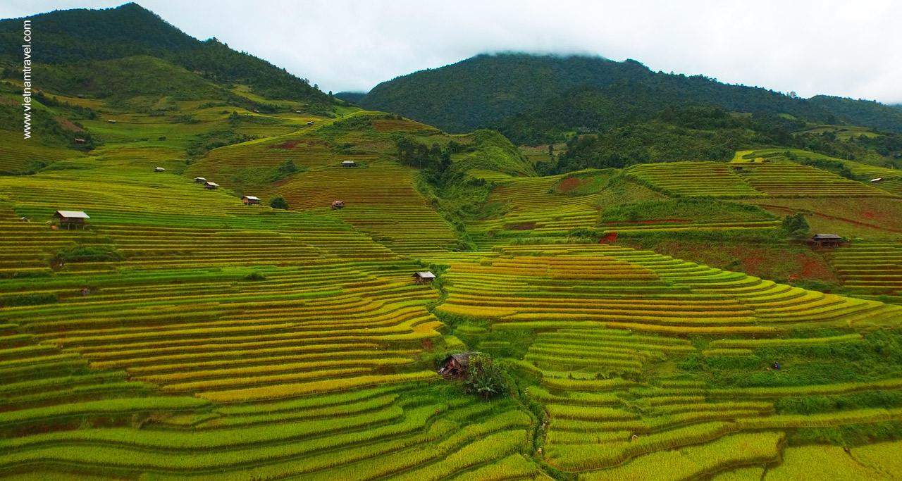imgage of rice terraces