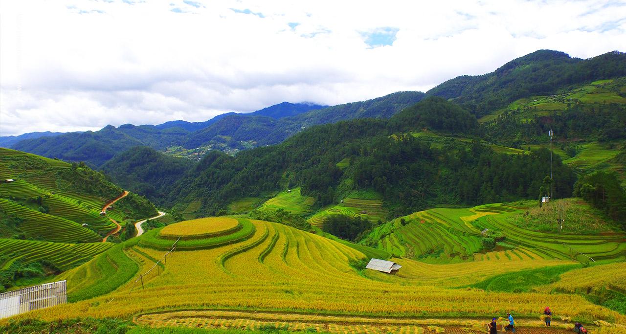 mu cang chai rice terraces