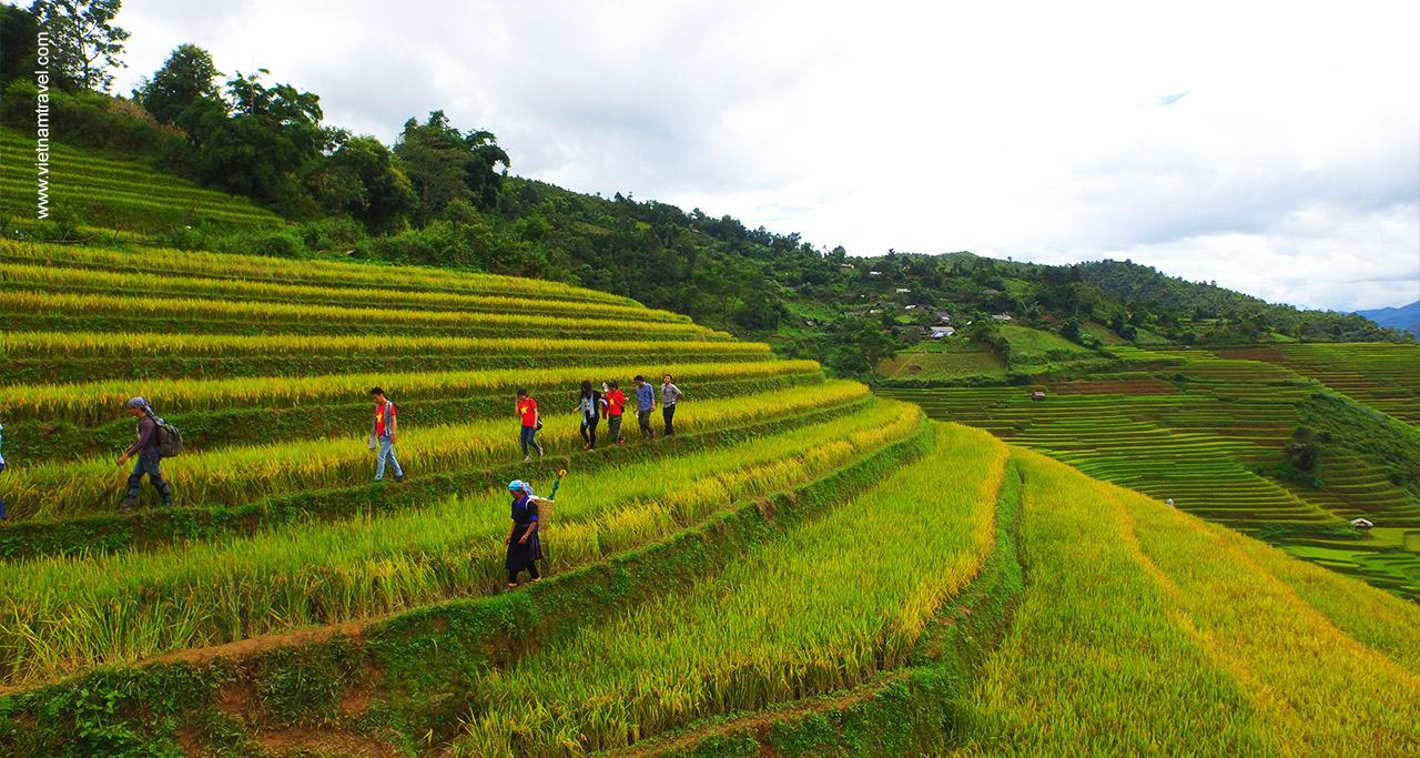 rice terraces in vietnam