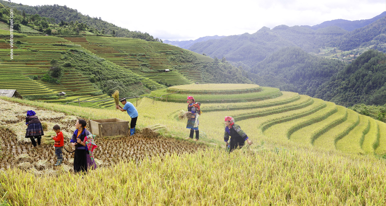 Mu Cang Chai , Vietnam   Places to travel, Vietnam travel