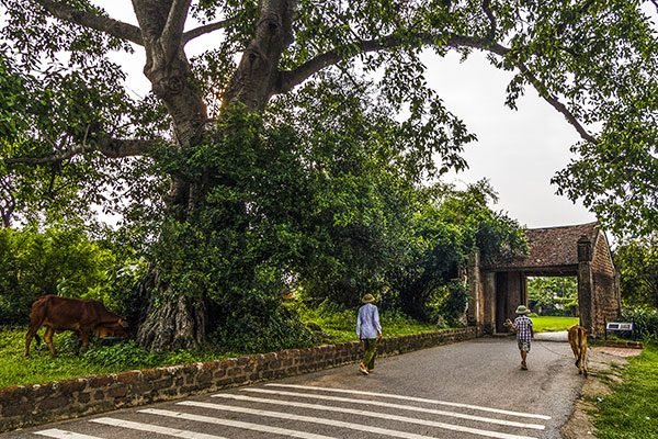 Visit Duong Lam Ancient Village