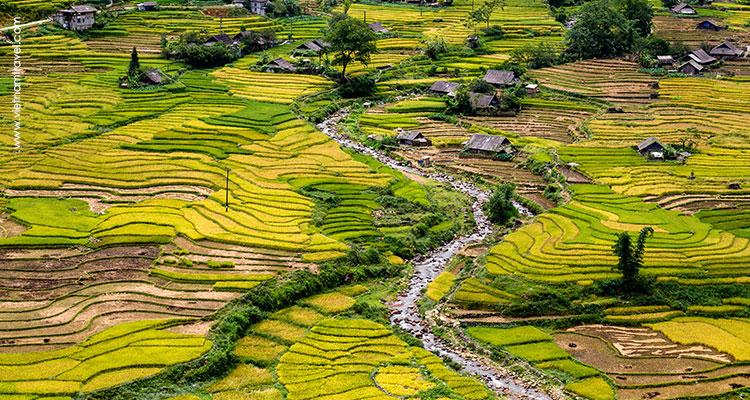 Rice Paddy in Sapa